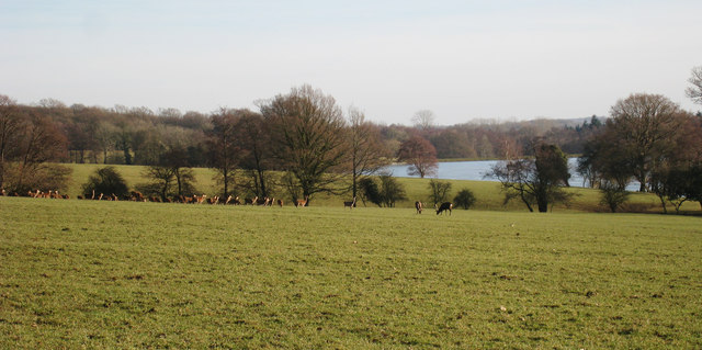 Deer at Wadhurst Park, Sussex, site of Hightown (via geograph.org.uk)