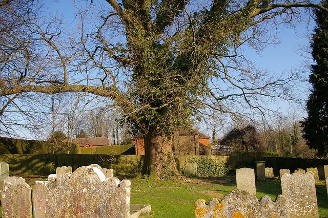 Graves in Burwash churchyard