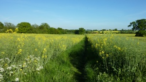 Countryside near Epping, Essex (via annierack.hoofbags.me.uk)