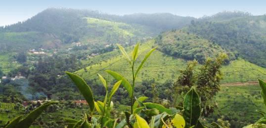 Nilgiri Hills, India (via onthegotours.com)